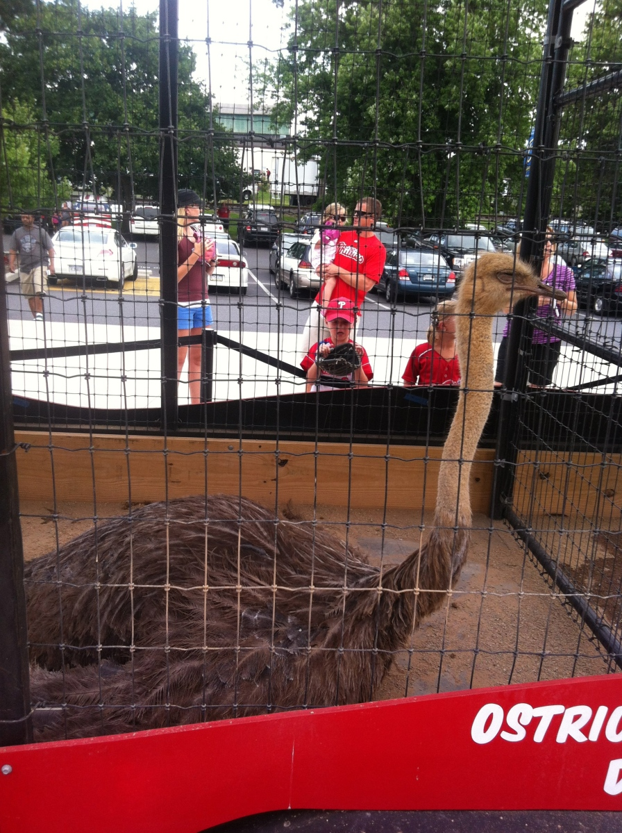 "Nothing says ""Fightin Phils"" like ostriches."